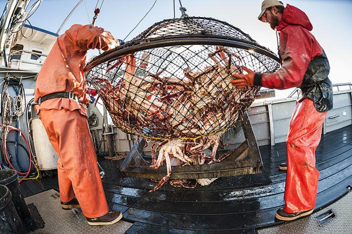 Đệ nhất cua biển huỳnh đế 10 triệu đồng/con vẫn được đại gia săn lùng