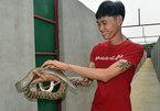 Đàn rắn 10.000 con: Dài hơn 1 mét lúc nhúc đáng sợ ở Đồng Nai