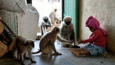 Kinh hoàng khỉ cắn lún sọ bé gái 14 tháng tuổi