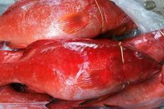Ăn cá mú đỏ 10 triệu/kg, nhậu bọ xít rang... lấy sức thức mùa World Cup