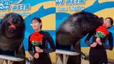 Chú sư tử biển cơ hội nhất thế giới