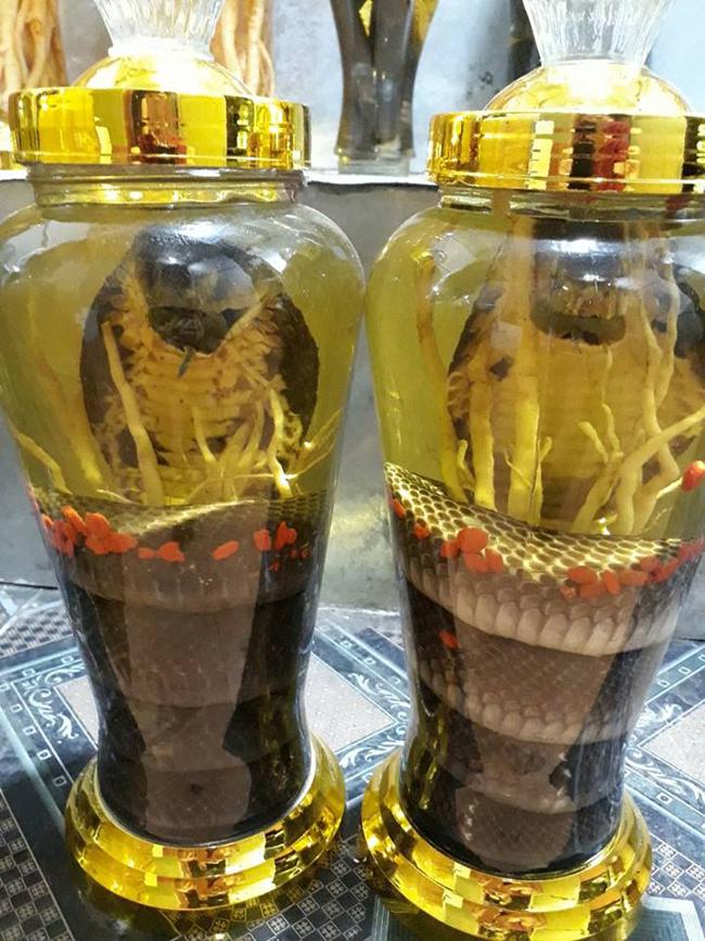 'Rùng mình' ngắm bộ sưu tập rượu ngâm rắn của đại gia đất Bắc