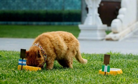 Mèo 'tiên tri' qua đời sau khi đoán đúng kết quả 6 trận World Cup