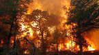 Liều mình chữa cháy rừng nhà hàng xóm, bị lửa thiêu chết