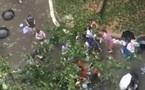 Nữ sinh hò nhau giải cứu thầy giáo bị cây đè