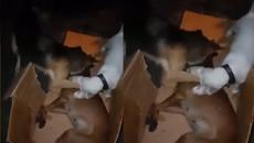 Chú chó liên tục lay gọi bạn đã chết khiến người xem không cầm được nước mắt