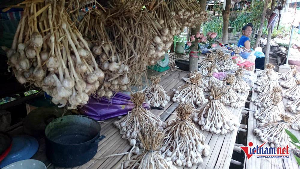 Sơn La,tỏi Sơn La,nông sản sạch