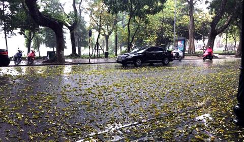 lá rụng trên hồ Gươm