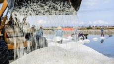 Những hạt 'muối đắng' trên cánh đồng Hòn Khói