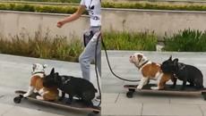 Chú chó đen đủi nhất hệ mặt trời