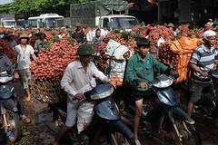 Bộ Nông nghiệp có văn bản gửi 4 bộ xin cơ chế đặc biệt