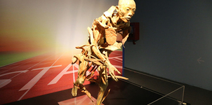 Giật mình với hình ảnh tại triển lãm cơ thể người lần đầu tiên ở Việt Nam