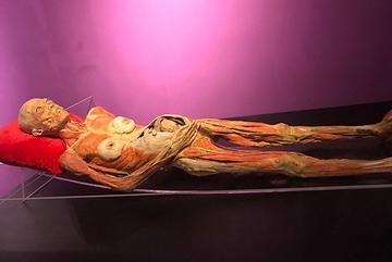 BTC triển lãm cơ thể người đầu tiên ở Việt Nam có dấu hiệu gian dối