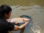 Loài 'cá vua' có tiền chưa chắc mua được, sống thọ vài chục năm