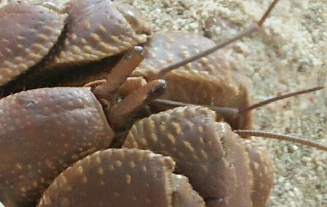 Bất ngờ bên trong lọ gốm cổ dưới đáy biển Lý Sơn