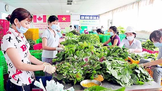 30 triệu người Việt làm việc trong khu vực kinh tế hợp tác, hợp tác xã