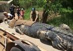 Xem bắt cá sấu 'quái vật' nặng hàng trăm cân