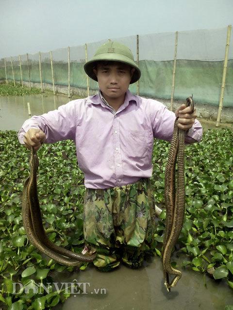 nuôi rắn
