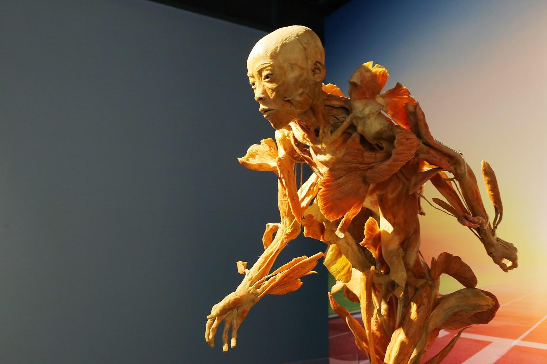 Cục Mỹ thuật: 'Triển lãm cơ thể người chỉ phù hợp ở trường Y'