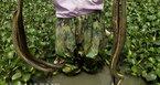 Hơn 300 con rắn lúc nhúc dưới đáy ao ở ngoại thành Hà Nội