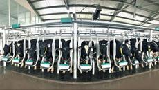 Vinamilk sản xuất sữa A2 đầu tiên ở Việt Nam