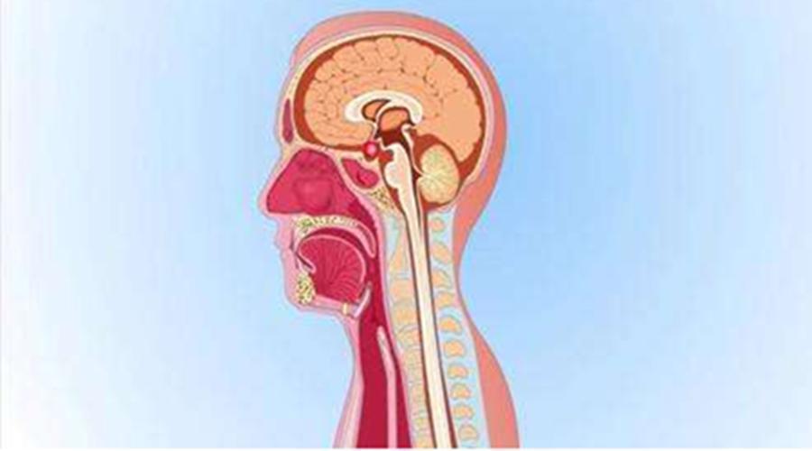 26 tuổi đã yếu sinh lý, đi khám chàng trai 'chết ngất' vì bị u não