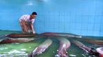 Đại gia chơi ngông 'săn' quái thú về làm thú cưng trong nhà