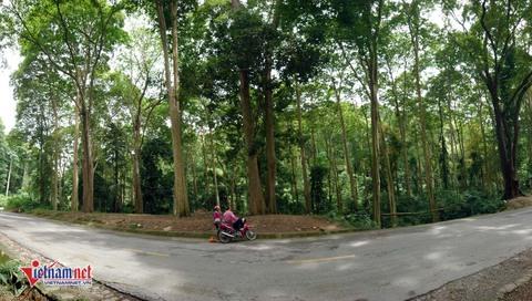 rừng săng lẻ nghệ an