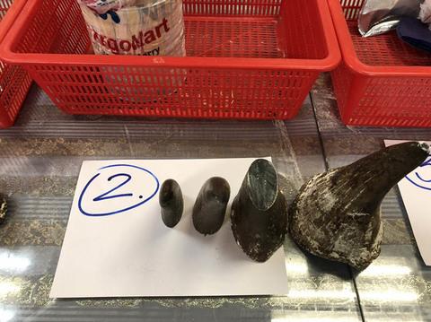 Bắt giữ vụ giấu 12 sừng tê giác Châu phi mang về Việt Nam