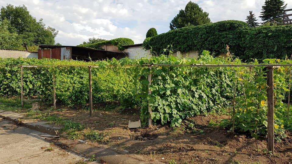 Cộng hòa Séc,Thực phẩm sạch,Làm vườn
