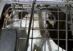 Giải cứu chim quý mắc kẹt trên dây điện ở Sài Gòn