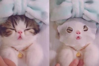 Chú mèo sướng nhất hệ mặt trời