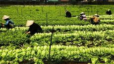 MM Mega Market đẩy mạnh chuỗi giá trị nông nghiệp bền vững