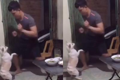 Chú chó có năng khiếu khiêu vũ