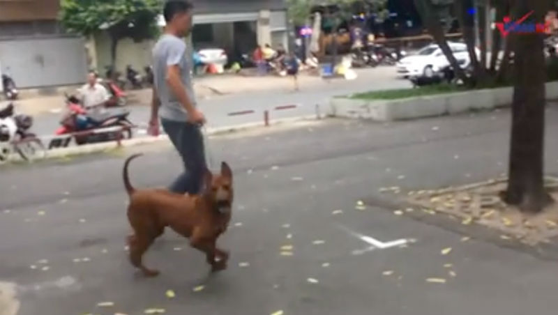 Sài Gòn,đoàn ngọc hải,chó thả rông