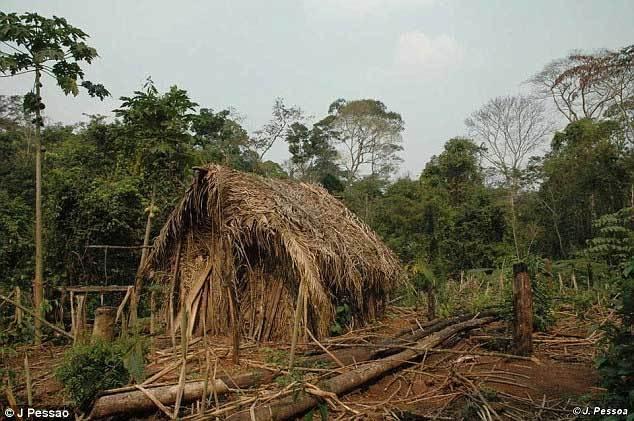 Video hiếm về người thổ dân đơn độc giữa rừng Amazon