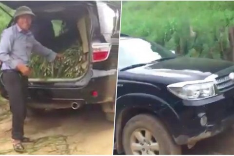 Nông dân Campuchia dùng xe sang Lexus chỉ để chở rơm