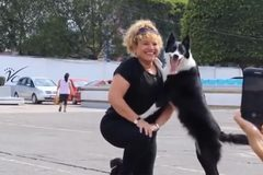 Chú chó thích chụp ảnh nhất thế giới