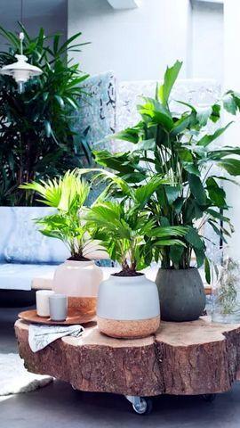Những loại cây tuyệt vời trang trí cho ngôi nhà đẹp của bạn
