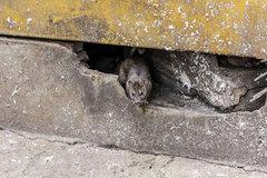 Bên trong 'Thủ phủ chuột' của nước Mỹ