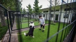 Dành hết tiền tiết kiệm để xây biệt thự cho chó
