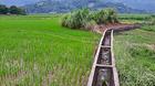 Hợp nhất Hà Nội: Biệt thự nhà vườn 10 năm 'nằm trên giấy'