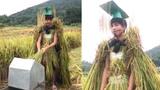 Đi gặt lúa cũng phải mang thần thái... đế vương
