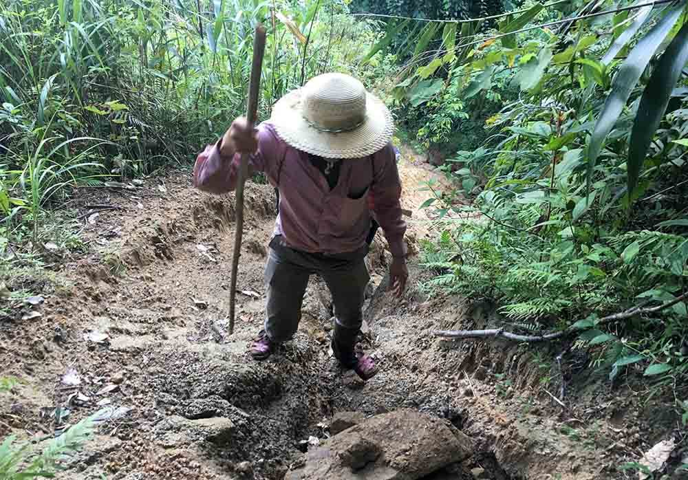 Nghệ An,lâm tặc,phá rừng