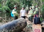 Để mất rừng, hàng loạt cán bộ bị kỷ luật