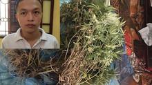 Căn phòng bí mật ở chung cư Hà Nội, quây bạt trồng cần sa