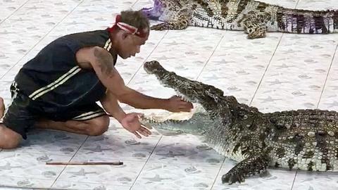 Tai nạn kinh hoàng của nghệ nhân huấn luyện cá sấu
