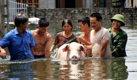 Lụt lịch sử ở Chương Mỹ: 'Hộ tống' lợn chạy khỏi xóm 3 không