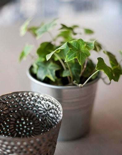Những loại cây trồng tốt nhất cho từng căn phòng trong nhà bạn