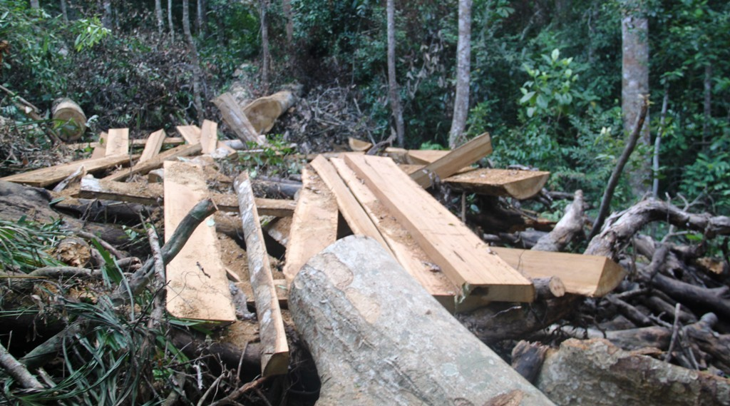 phá rừng,rừng